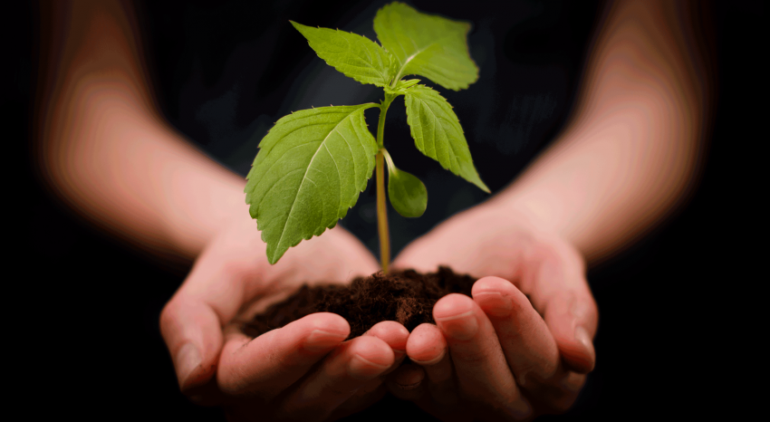 The Greencarrier spirit – our way of doing things