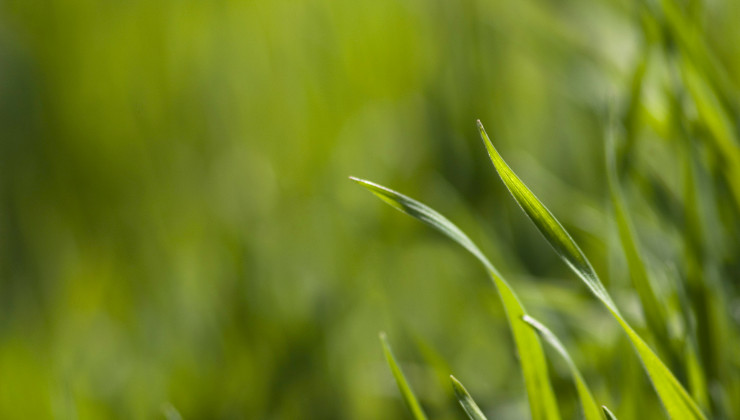 Greencarrier Environment