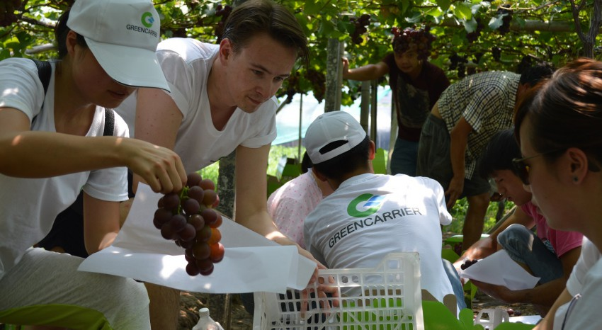 Picking grapes to raise funds for heart-diseased children