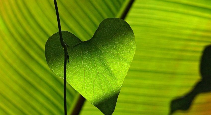 Corporate Social Responsibility and the Greencarrier Spirit